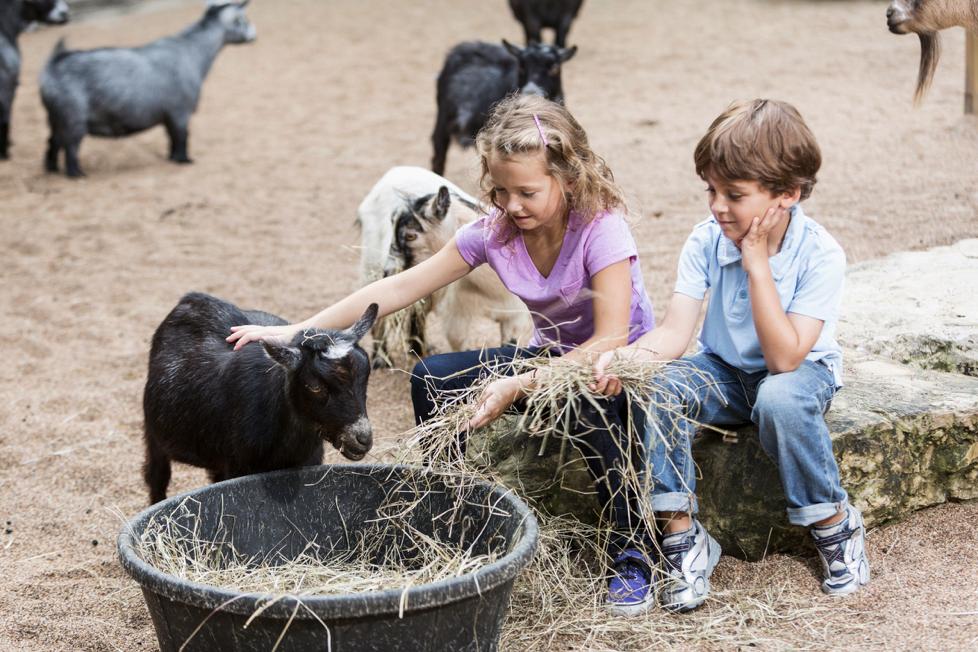 kinderboerderij diervriendelijk